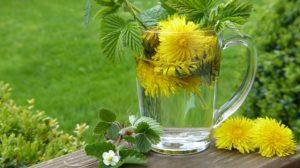 Löwenzahn-Tee-für-Leber-Detox-gesunde-Haut-und-Magen