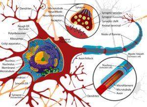 Multiple Sklerose MS - häufige Probleme Ursachen und Behandlung