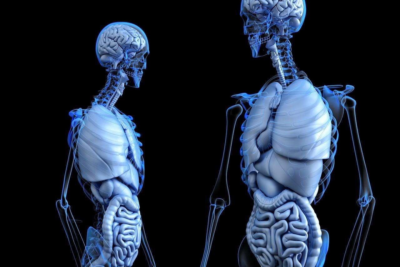 Zusammenhang zwischen Darm und Psyche