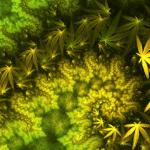 10 Kräuter & Superfoods, die Cannabinoide produzieren