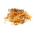 Cordyceps - Vorteile und Wirkung der Heilpilze
