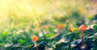 Heilpilze: Liste der besten Pilze und ihre Heilwirkung
