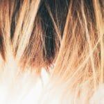 Warum haben Menschen unterschiedliche Haarfarben?