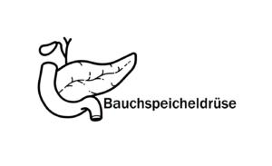 Bauchspeicheldrüse - Funktion und Erkrankung