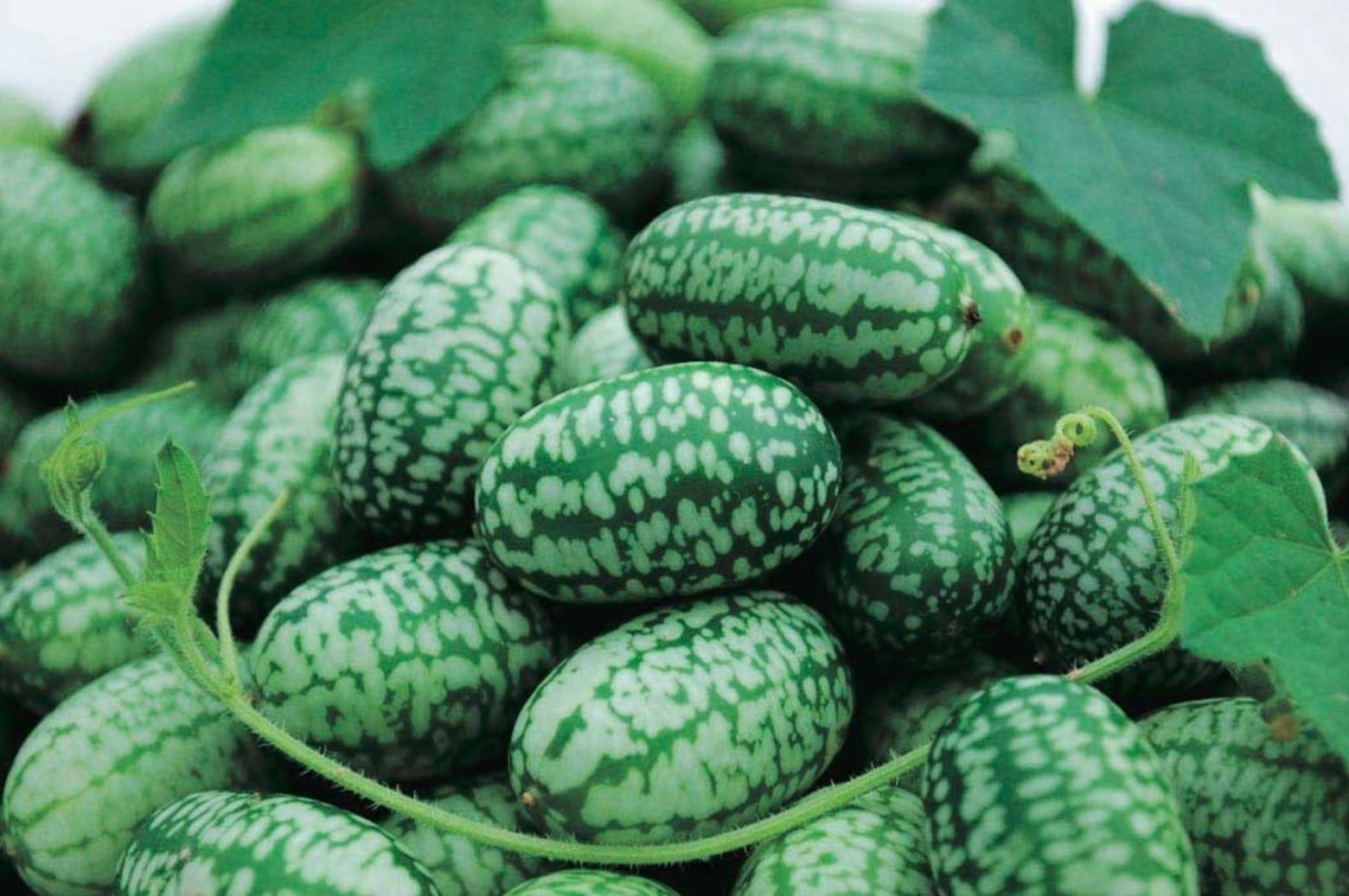 Cucamelon - Vorteile des Superfoods für die Gesundheit