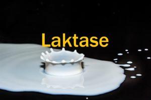 Vorteile Verwendung und Wirkung von Laktase
